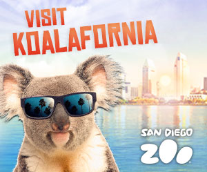 Visit Koalafornia at the San Diego Zoo